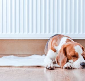 Dog resting near a warm central heating radiator